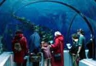 Forfait Familial - Aquarium