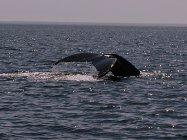 L\'incontournable activité au pays des baleines