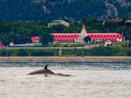 Baleine en Folie