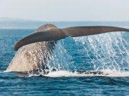 Forfait Croisière d\'observation des Baleines