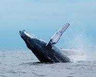 À la découverte du milieu marin