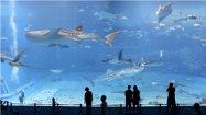 Forfait Aquarium