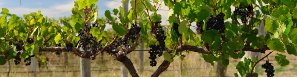 Vignobles et Cidreries au Québec